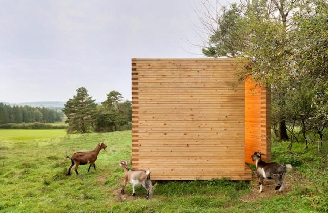 arhitekta izgradio malenu drvenu  u0161talu za slatke pigmejske