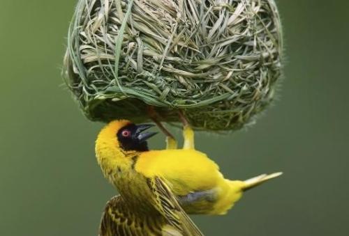Ptičije gnezdo! - Page 6 Biodiversitynest-5