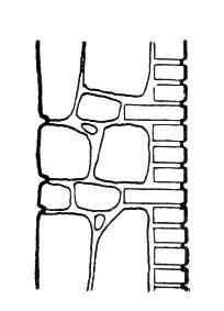 zk3196.jpg